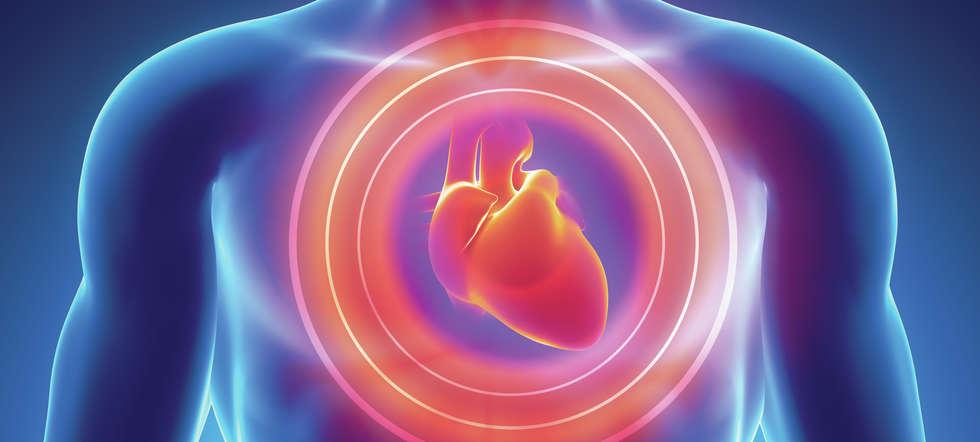 Das Herz in der Petrischale