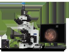 Effiziente Untersuchung ganz ohne Fluoreszenzmarkierung